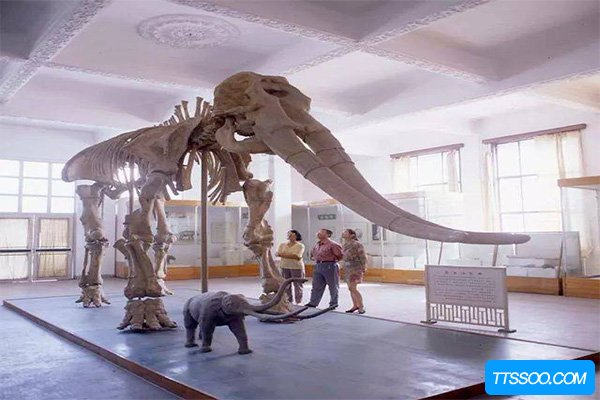 黄河象300万前被埋于黄河底 牙齿占身体的一半(长达4米)