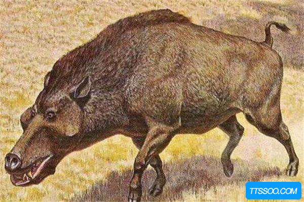 古近纪巨型生物:巨猪 脑部只有拳头大小(智商存在缺陷)