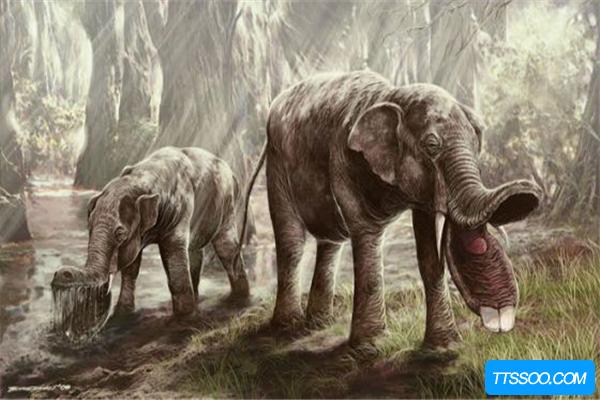 棱齿象或是大象的祖先,因环境巨变灭绝(适应能力差)