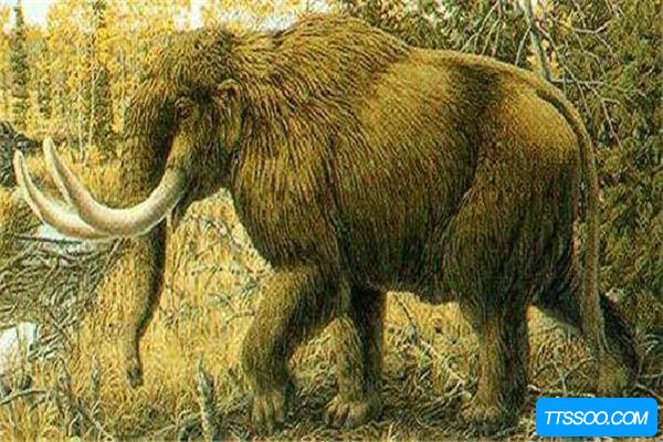 美洲乳齿象满身毛发形似棕熊 因结核病惨遭灭绝