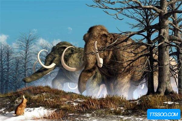 猛犸象VS非洲象体型谁更大?史前猛犸象略胜一筹(达7吨)