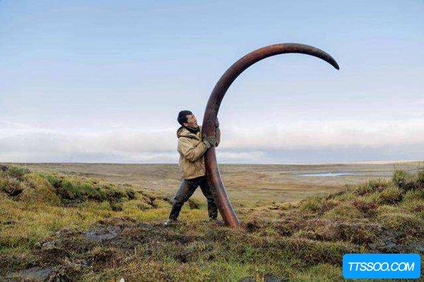 猛犸象牙合法吗?能不能自由买卖猛犸象牙