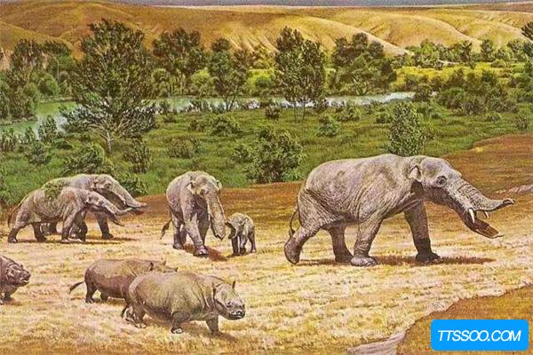 四棱齿象与现代象极为相似 堪称当时最大的哺乳动物