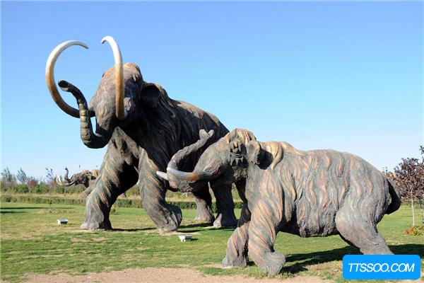 真猛犸象曾是世界上最大的象 经历几万年骨骼依然未石化