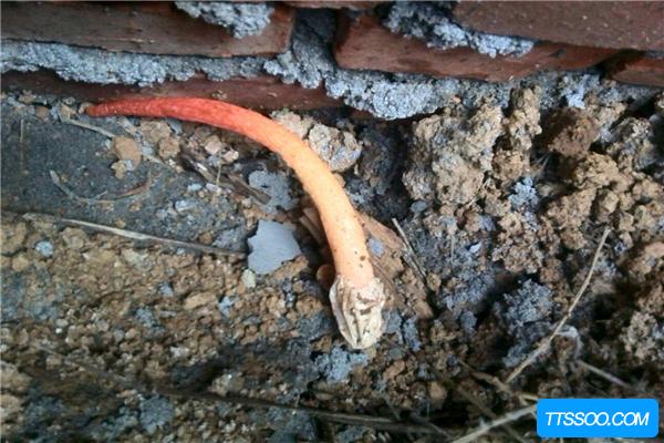 真足蛇生存于9200万年前 是由古蜥蜴进化而来