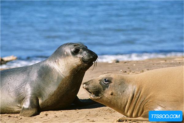海狗的祖先是什么?
