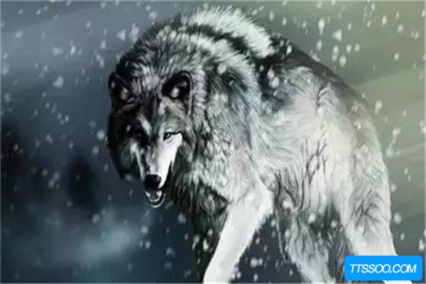 狼的祖先是什么?
