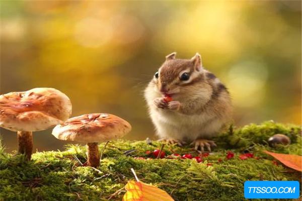 松鼠的祖先是什么?