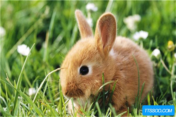 兔子的祖先是什么?