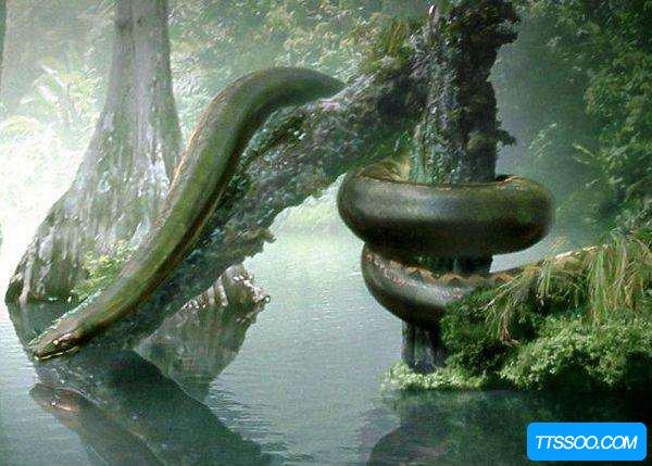 泰坦巨蟒的天敌是谁?泰坦巨蟒可以敌过任何生物吗