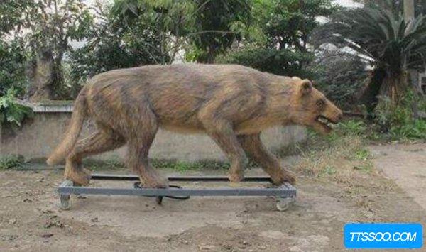恐狼是什么动物?恐狼为什么会灭绝(物竞天择)