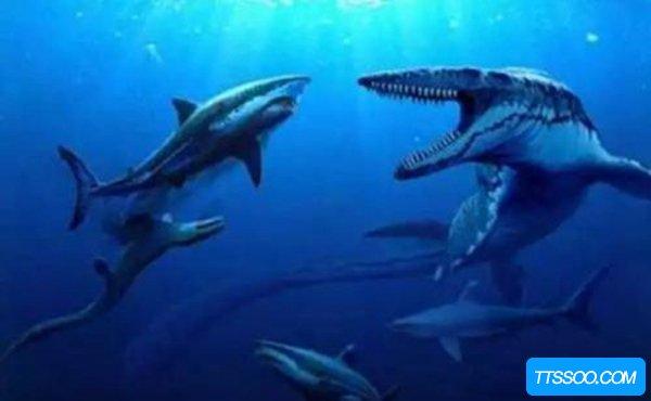 白垩刺甲鲨有多长?长度为5-7米之间相当恐怖