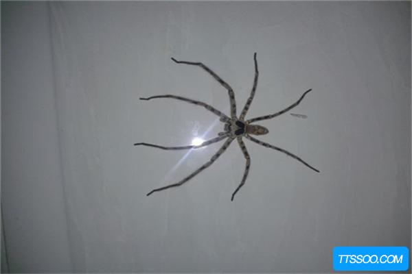 蜘蛛的祖先与蝎子同类,五亿年前就有活动痕迹