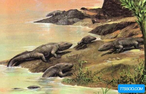 鱼到人的进化图片,鱼-提塔利克鱼-两栖动物-人(跨越亿年)