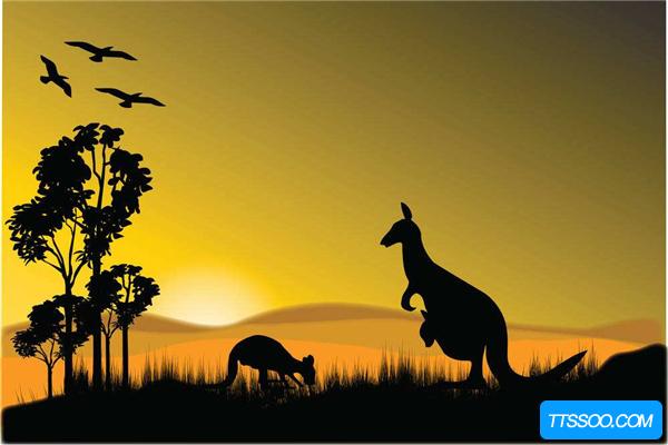 袋鼠的祖先:生活于1亿年前的袋兽可能性最大(以肉为食)