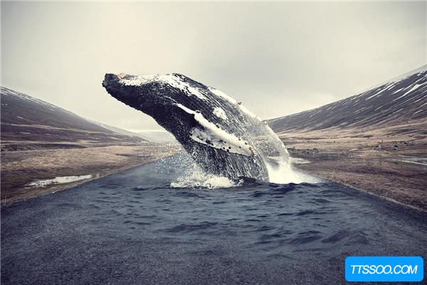 鲸鱼的祖先进化图 鲸鱼最早生活在树上(长有四肢和毛发)
