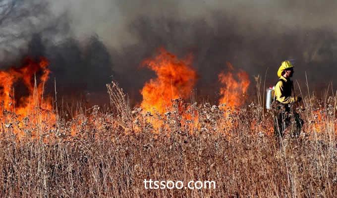 野外火灾有多大的破坏力