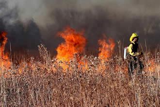 野外火灾有多大的破坏力?看看加州2020年的野外火灾情况就懂了